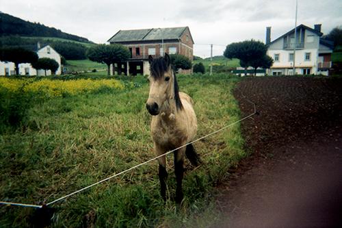 o seu cabalo bayo